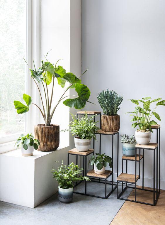 Trend Indoor Garden